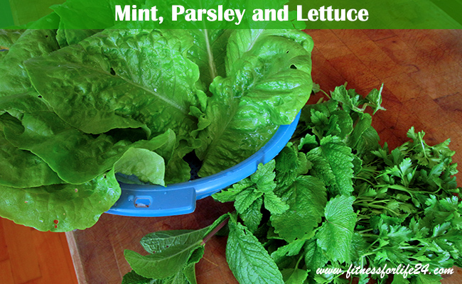lettuce-mint-parsley