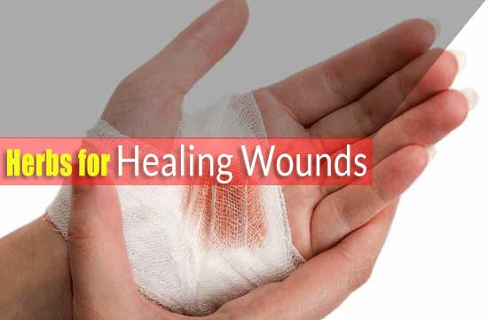 Herbs for Healing Wounds