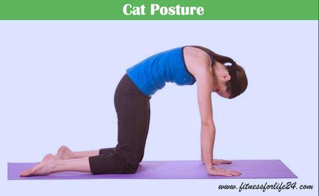 Cat Posture