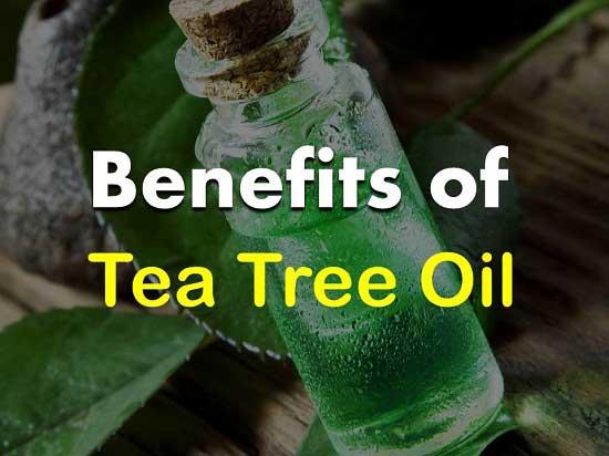 Benefits of Tea Tree Oil
