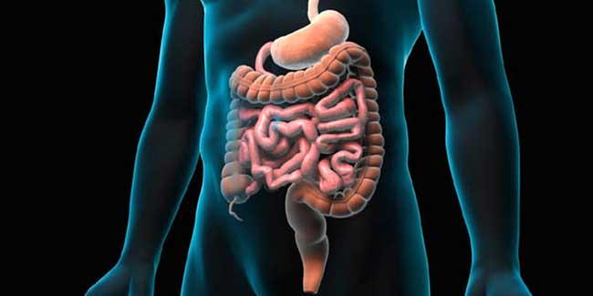 detox intestine